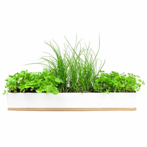 Herb Garden Windowsill Grow Kit