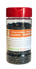 Orius insidiosis - Minute Pirate Bug - Natural and Organic Thrip Control
