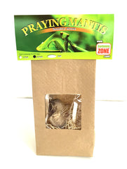 Praying Mantis Egg Cases - Hatching Habitat Bag