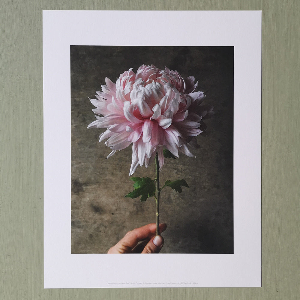 Cutting garden Chrysanthemum print, medium