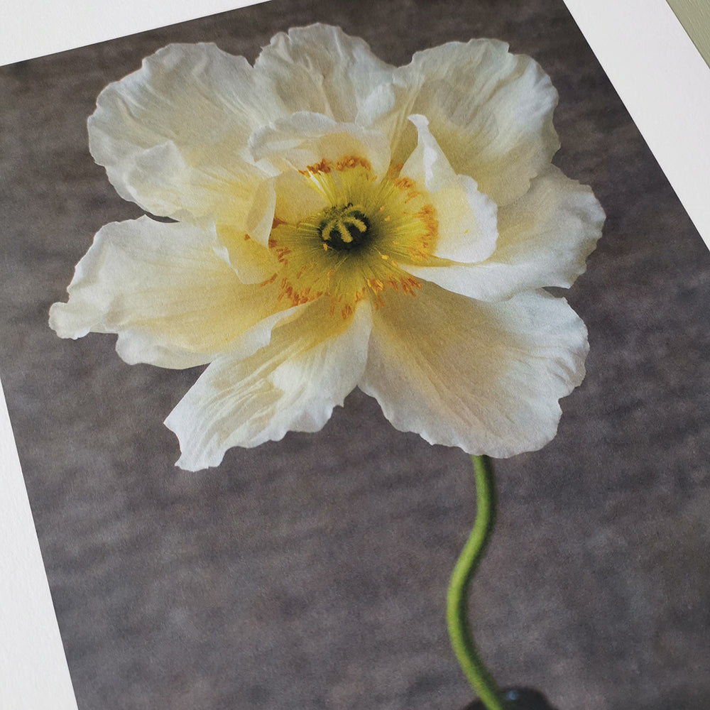Cutting garden poppy print, medium