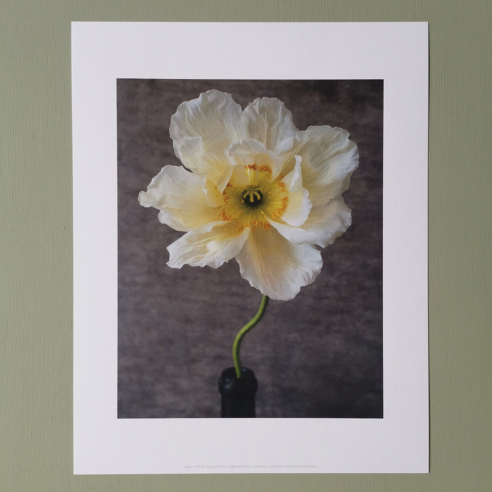 Becky Crowley medium print - Poppy