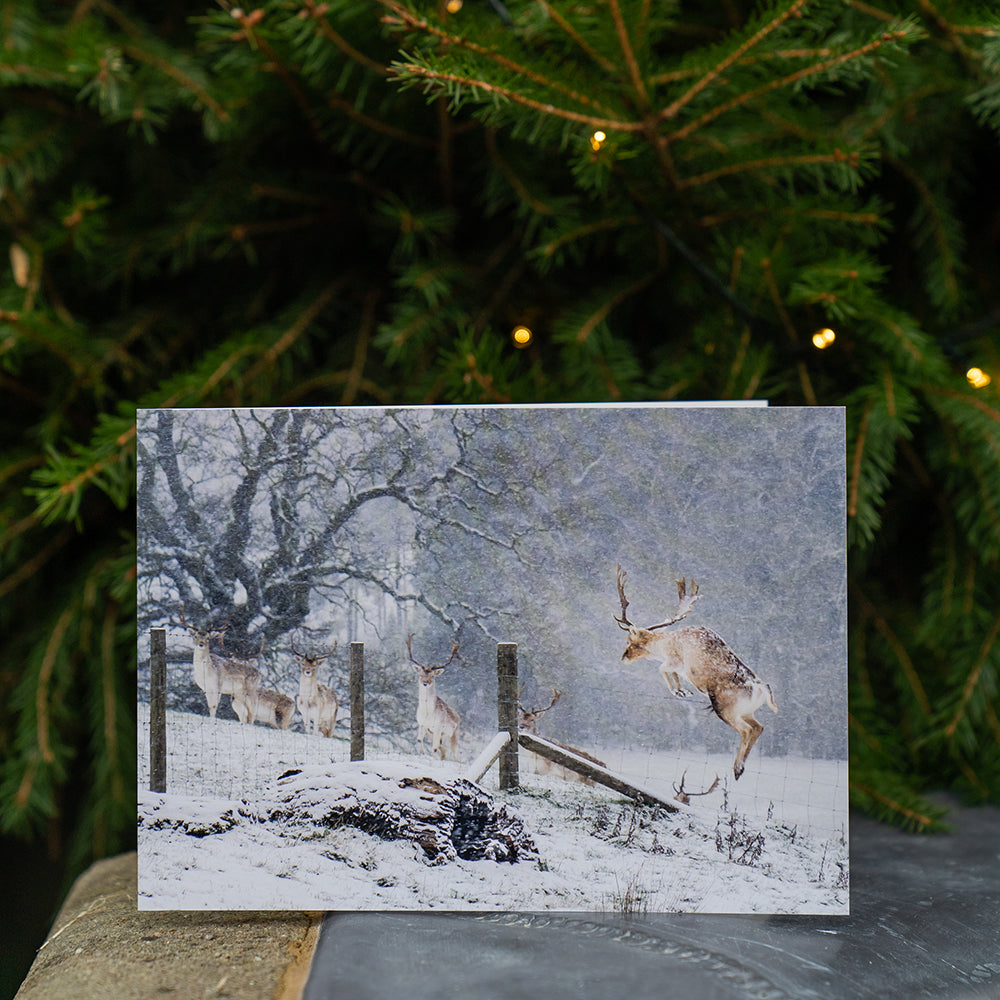 Chatsworth stag Christmas cards - 10 card pack