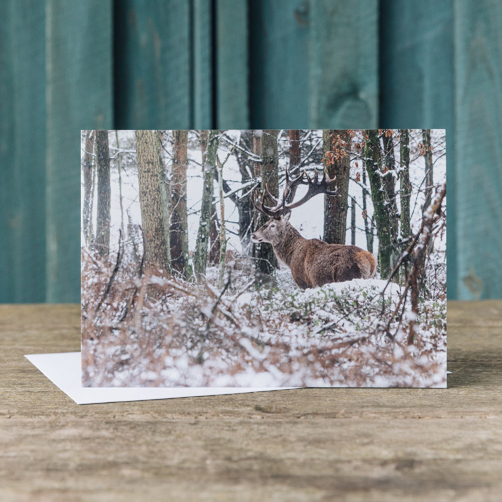 Deer in the park Christmas cards