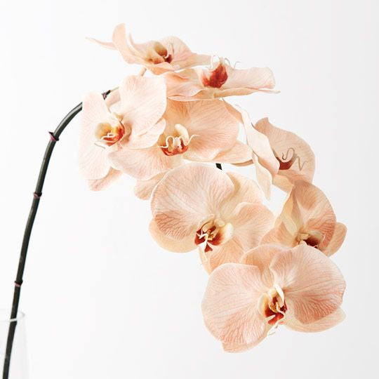 Orchid - Salmon