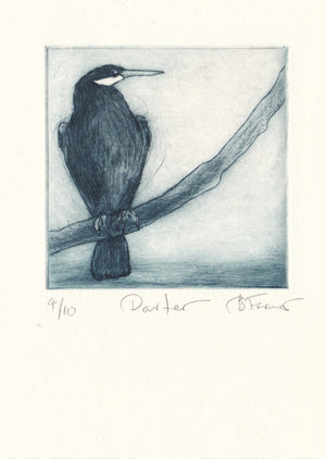 Darter - Original Etching