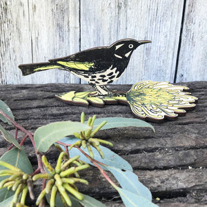 New Holland Honeyeater - Standing Bird