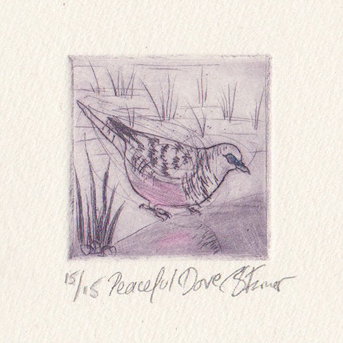 Peaceful Dove - Original Etching
