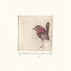 Red Backed Fairy Wren I - Original Etching