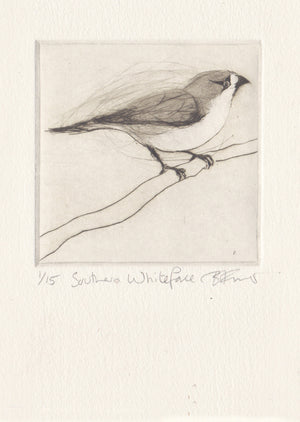 Southern Whiteface - Original Etching