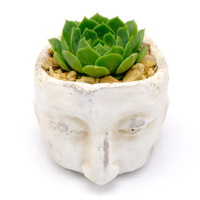 Heads Up Succulents