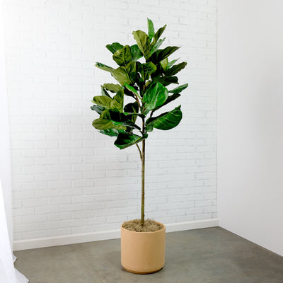 Potted Faux Ficus Lyrata