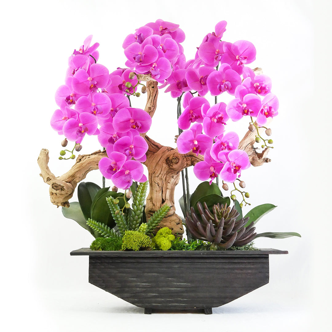 Delilah's Orchids