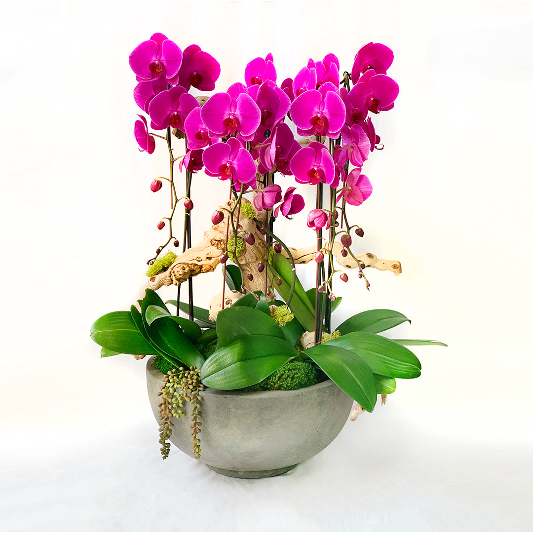 Premium long cascading orchids in a rustic round bowl