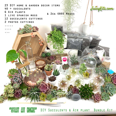 """Stay At Home"" DIY Succulent & Air Plant Bundle Kit"