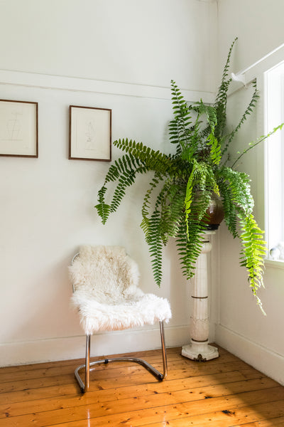 How to Grow an Indoor Jungle, According to Someone Who's Done It