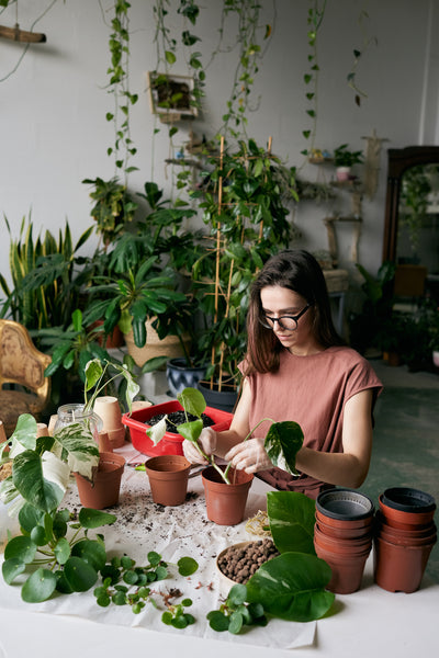 Our 9 Top Tips to Becoming the Best Plant Parent You Can Be
