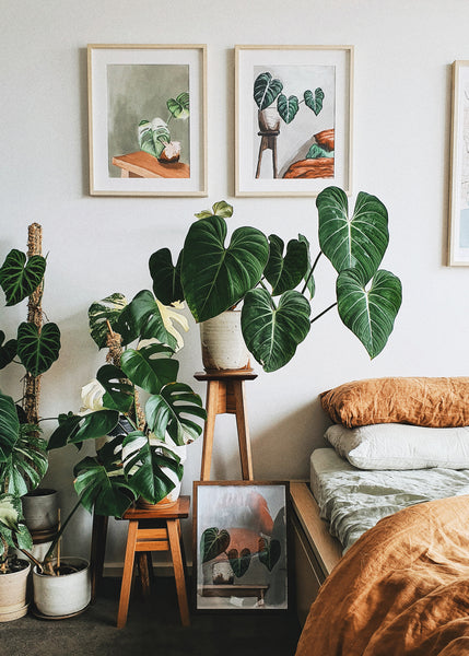 The Secret to Growing a Thriving Indoor Jungle