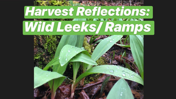 Harvest Reflections: Wild Leeks/ Ramps
