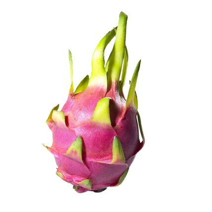 Branded Dragon Fruit (50-Pack)
