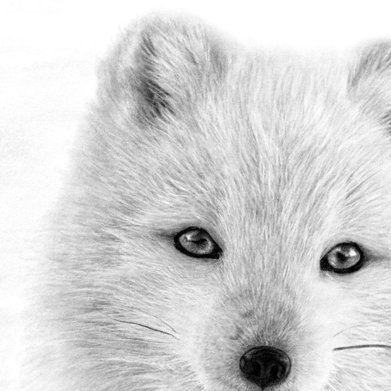 Arctic Fox Digital Drawing Close-up - The Thriving Wild