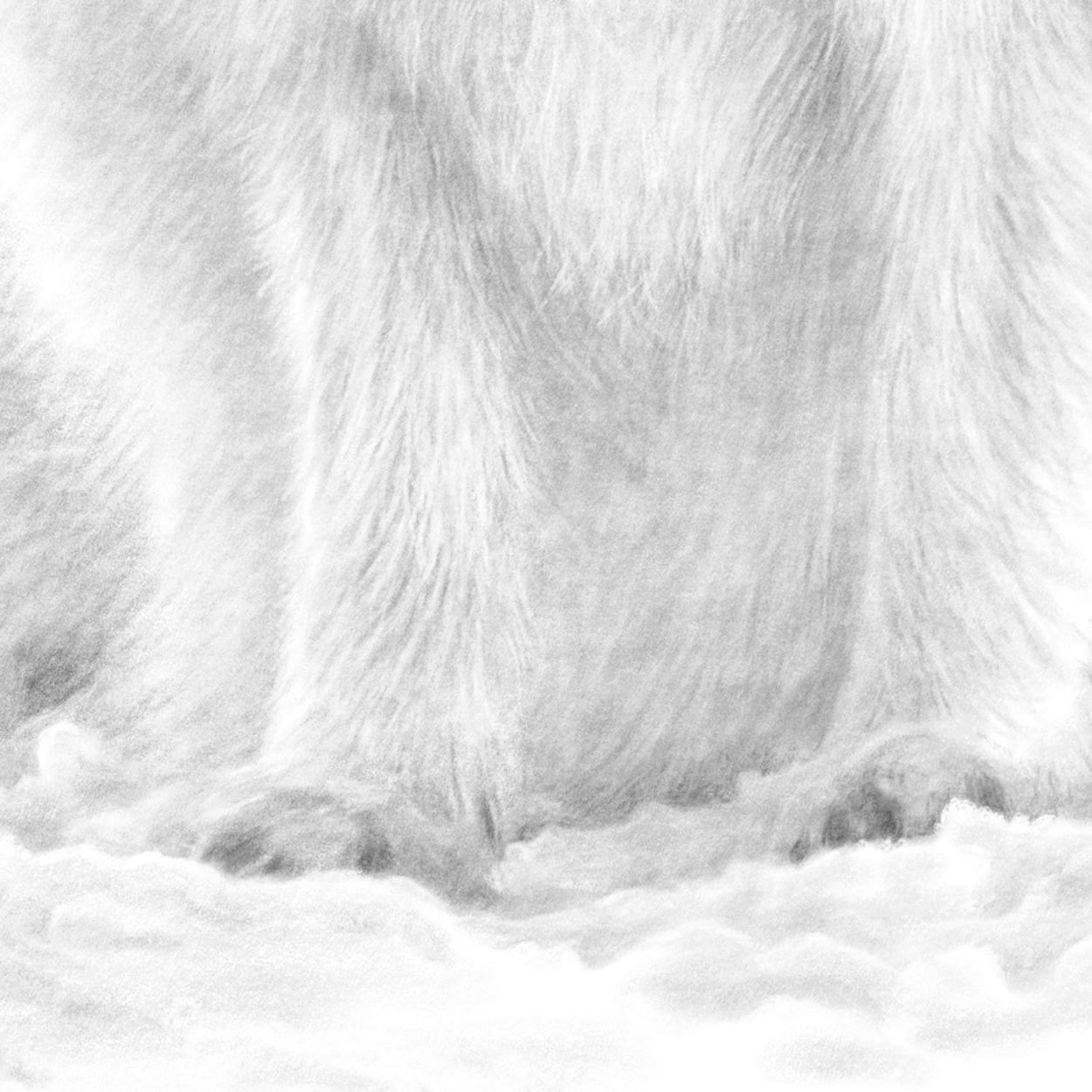 Arctic Fox Drawing Close-up - The Thriving Wild