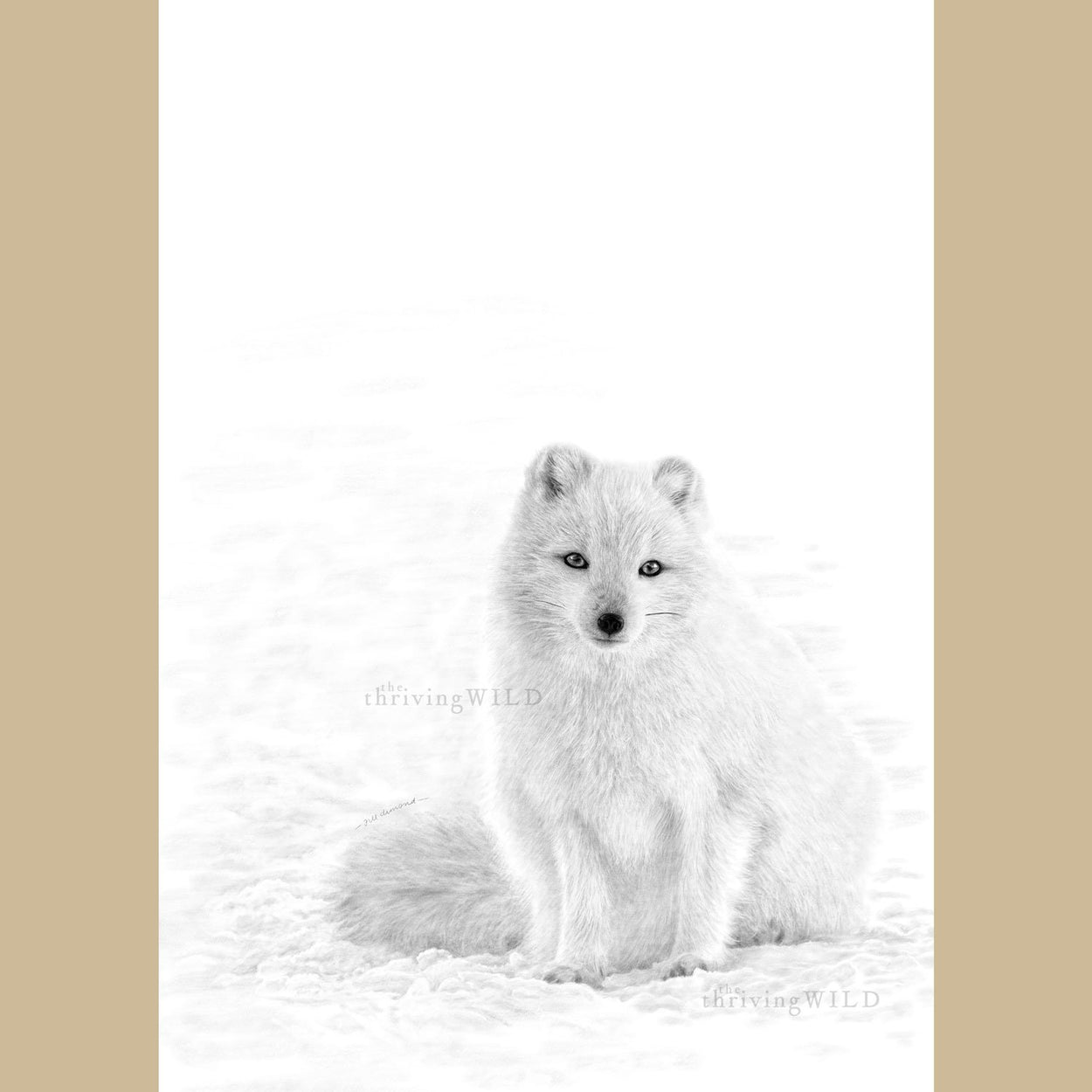 Arctic Fox Drawing Procreate Digital - The Thriving Wild