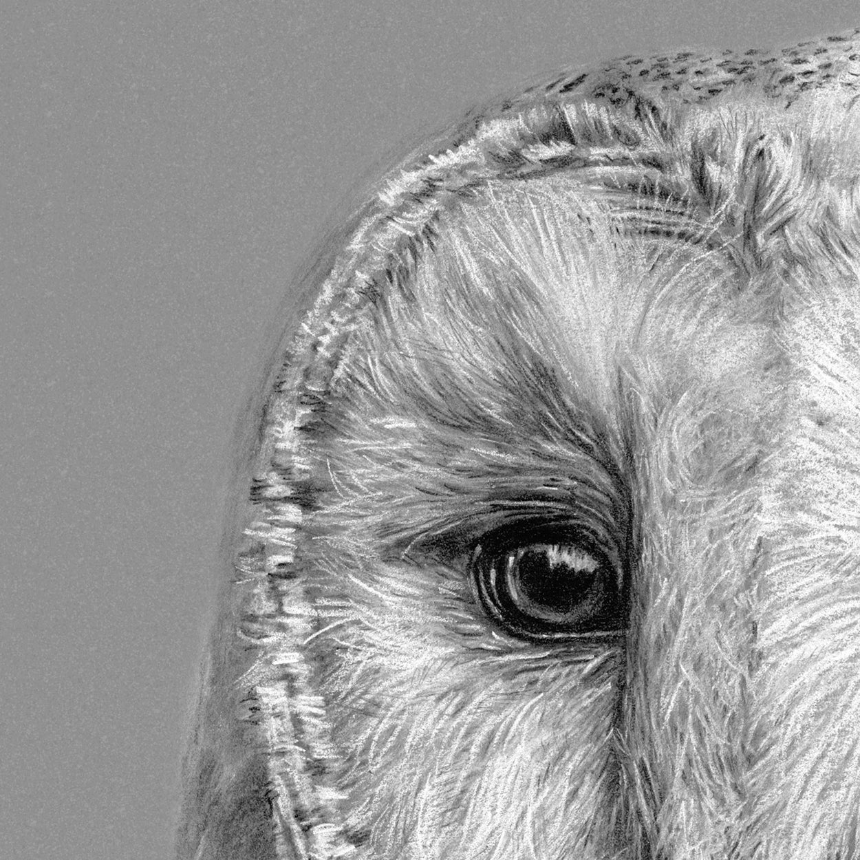 Barn Owl Drawing Close-up 2 - The Thriving Wild