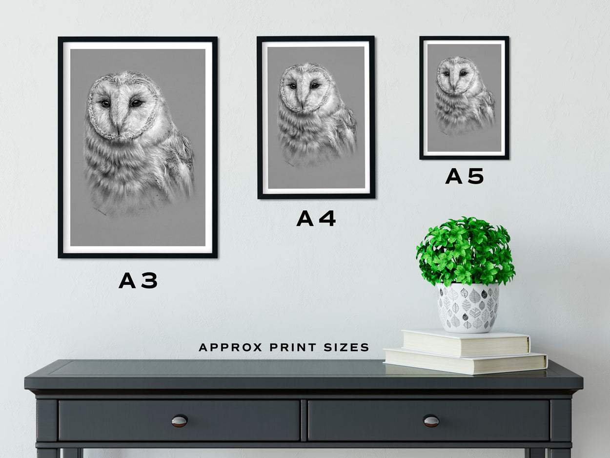 Barn Owl Print Size Comparison - The Thriving Wild