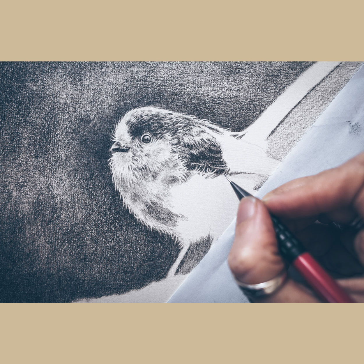Bird Long-Tailed Tit Drawing in Progress - The Thriving Wild