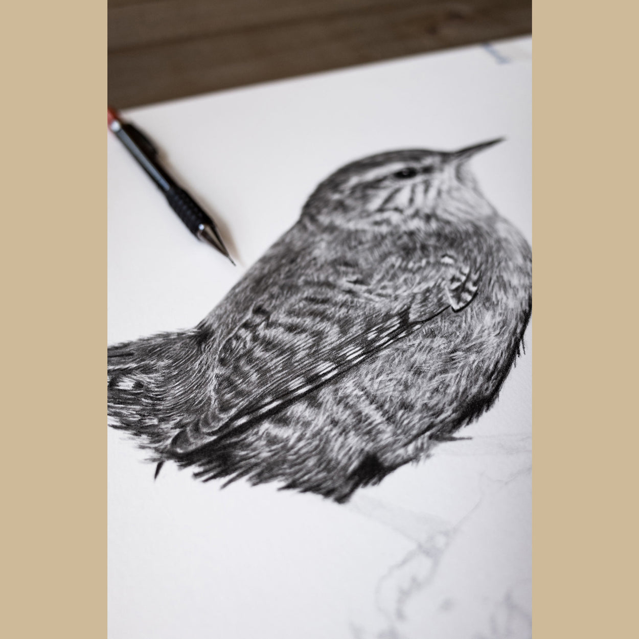 Bird Pencil Drawing - The Thriving Wild