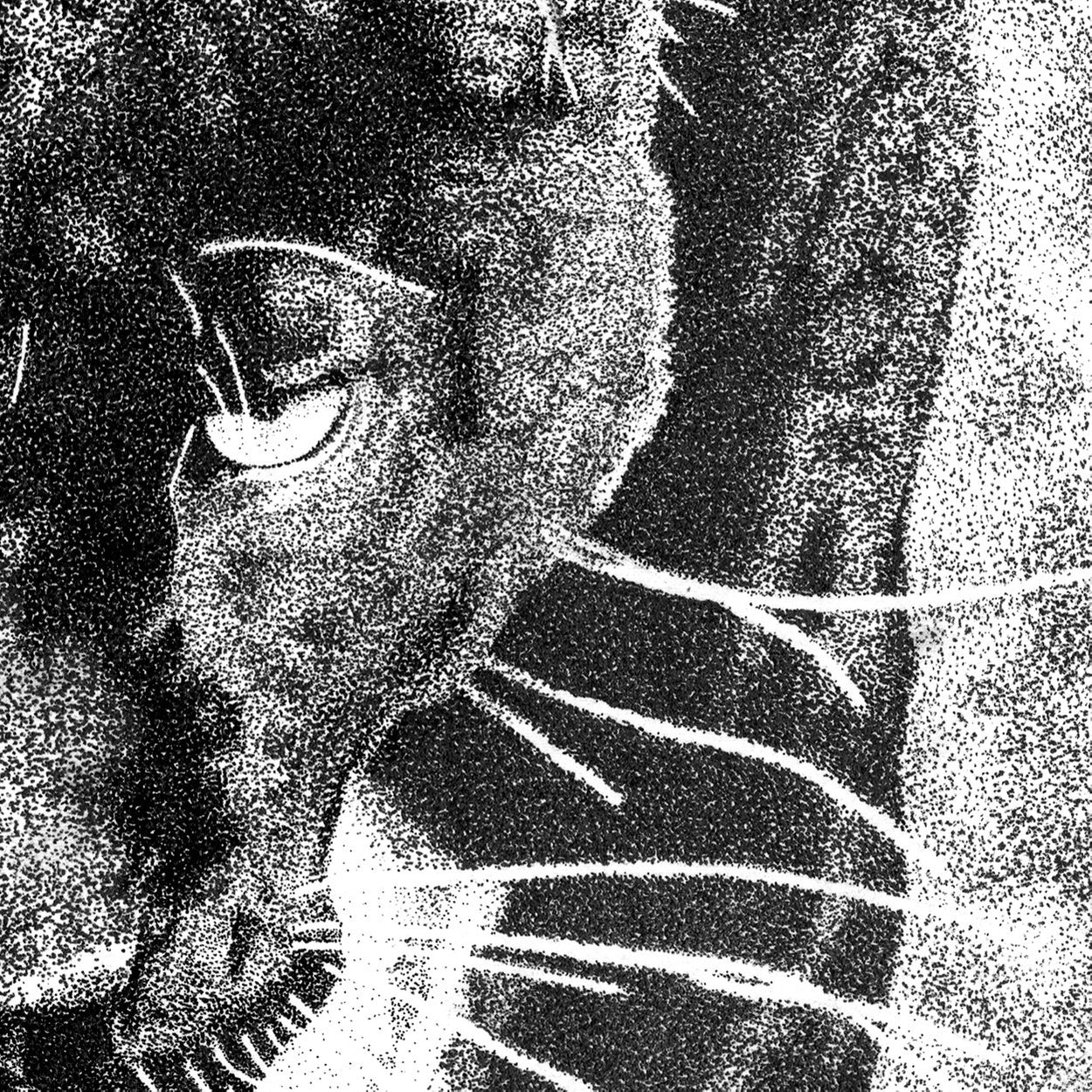 Black Leopard Pen Dotwork Close-up - The Thriving Wild