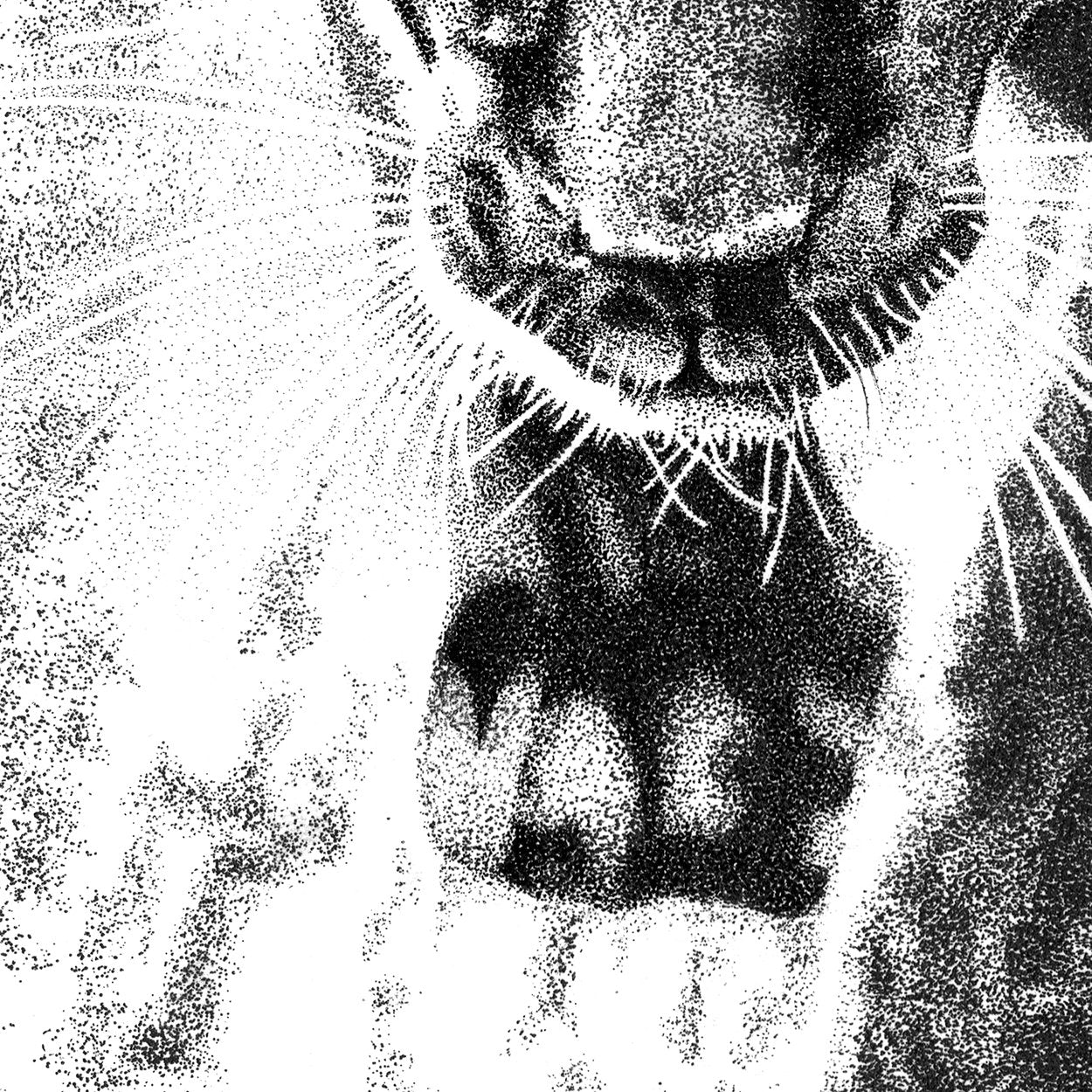 Black Leopard Pen Stippling Close-up - The Thriving Wild