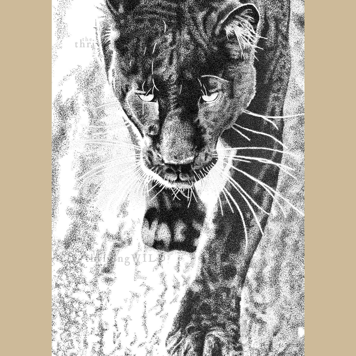 Black Leopard Pen Stippling Drawing - The Thriving Wild