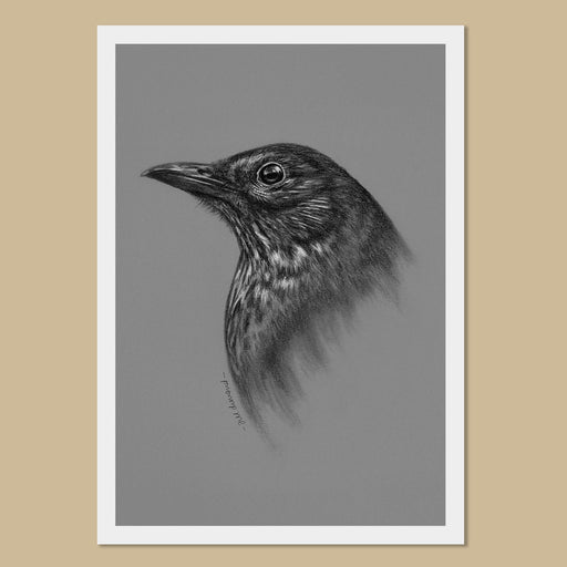 Blackbird Art Prints - The Thriving Wild - Jill Dimond