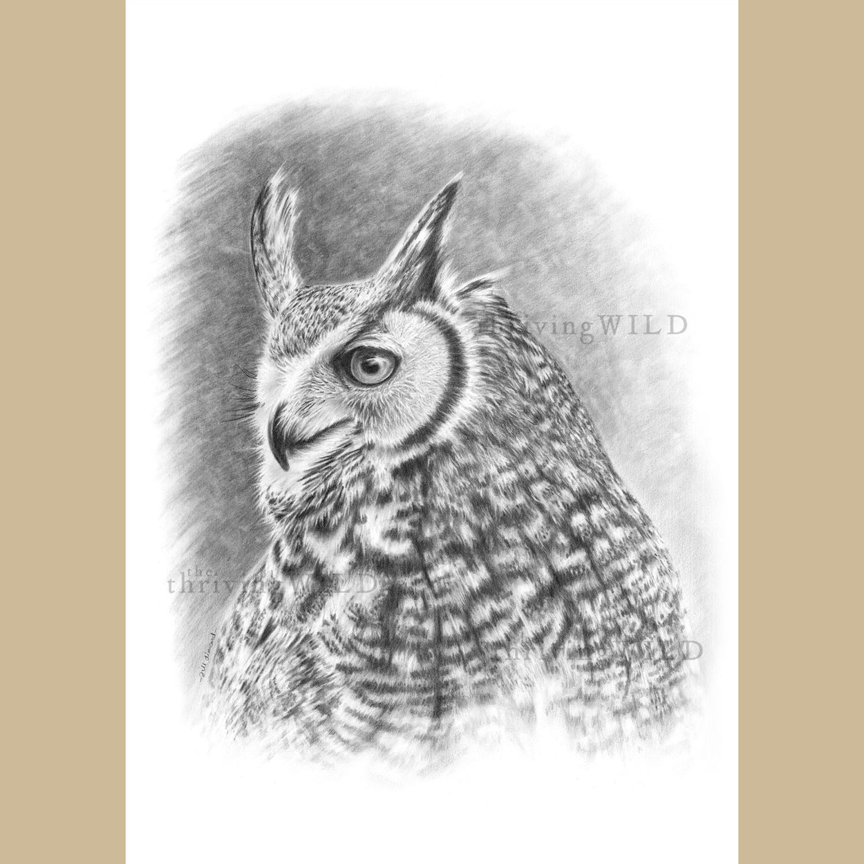Bubo Virginianus Pencil Drawing Great Horned Owl - The Thriving Wild - Jill Dimond