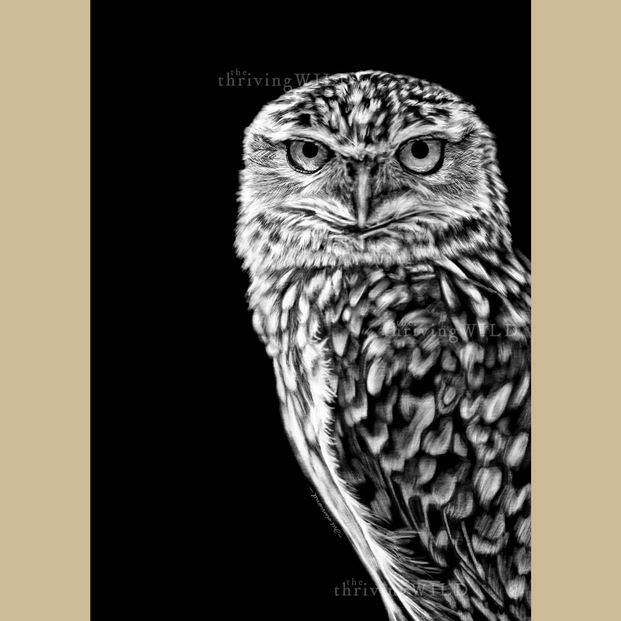 Burrowing Owl Procreate Digital Drawing - The Thriving Wild