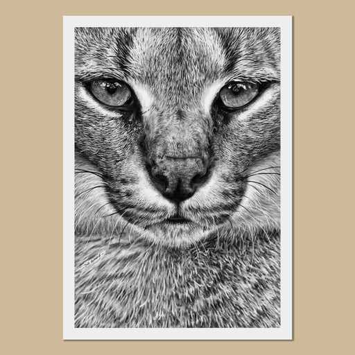 Caracal Art Prints - The Thriving Wild