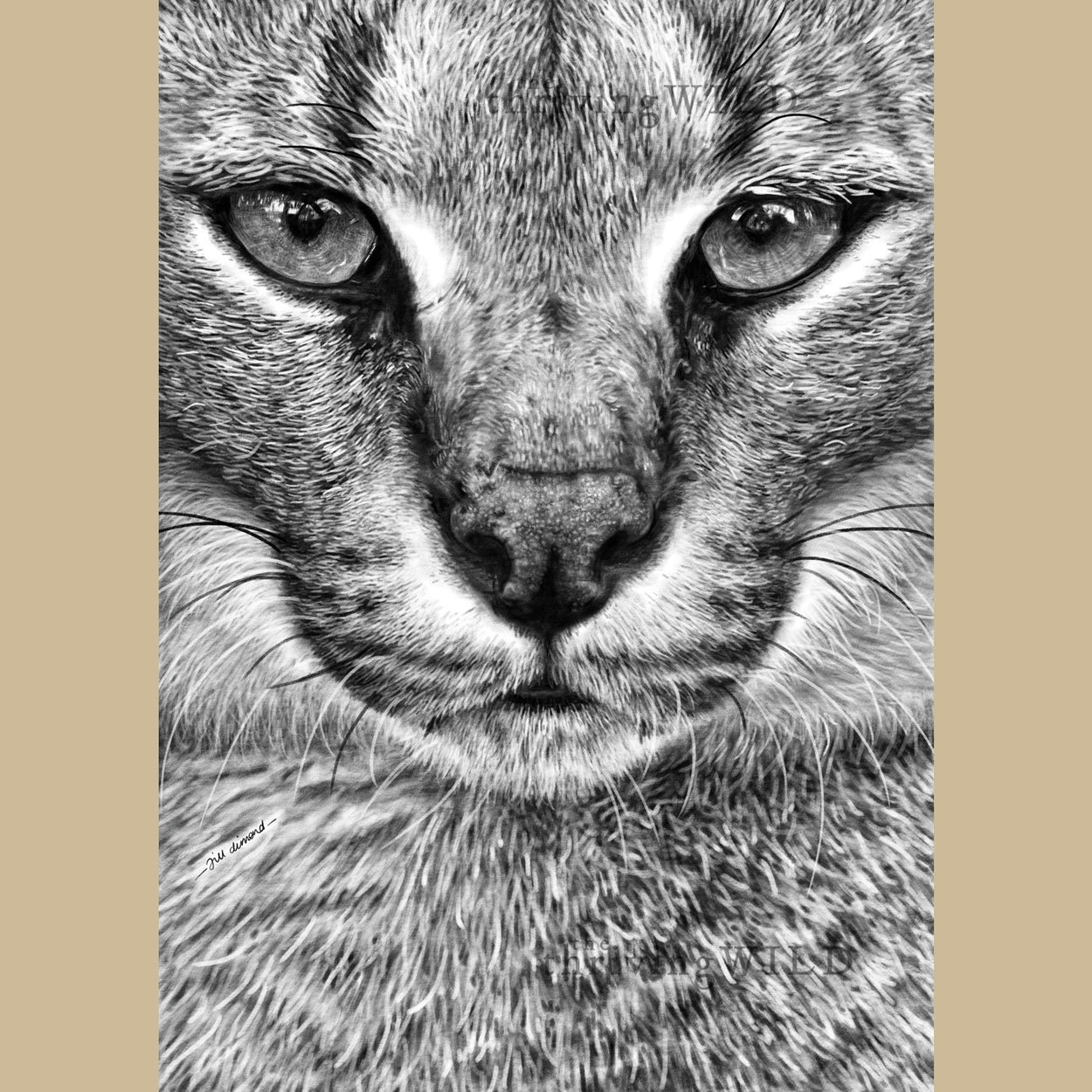 Caracal Lynx Procreate Digital Drawing - The Thriving Wild
