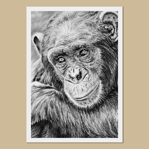 Colin the Chimpanzee Art Prints - The Thriving Wild