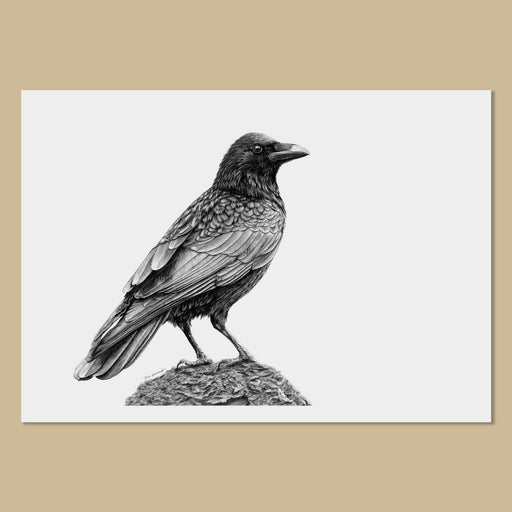 Crow Art Prints - The Thriving Wild