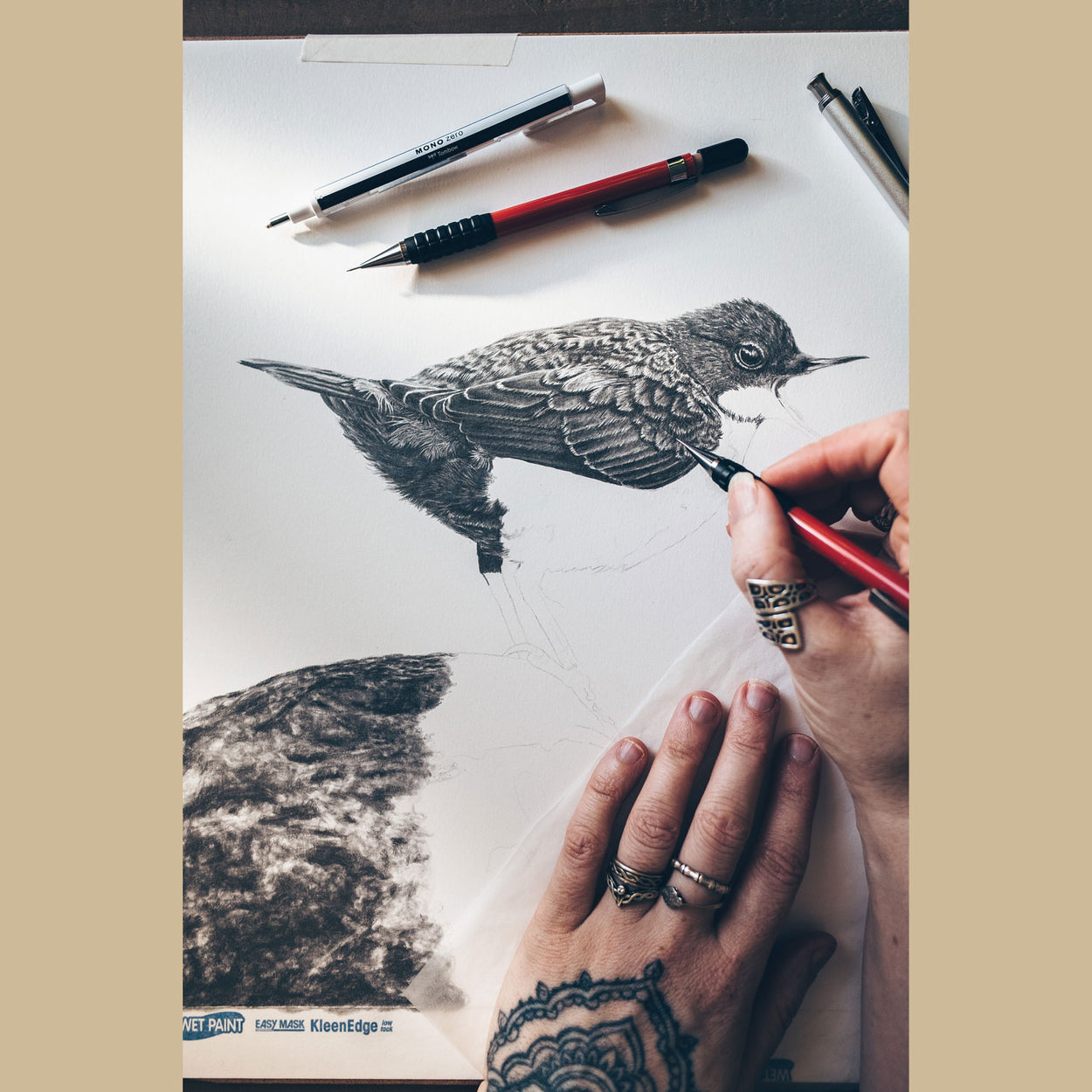 Dipper Bird Pencil Drawing in Progress - The Thriving Wild