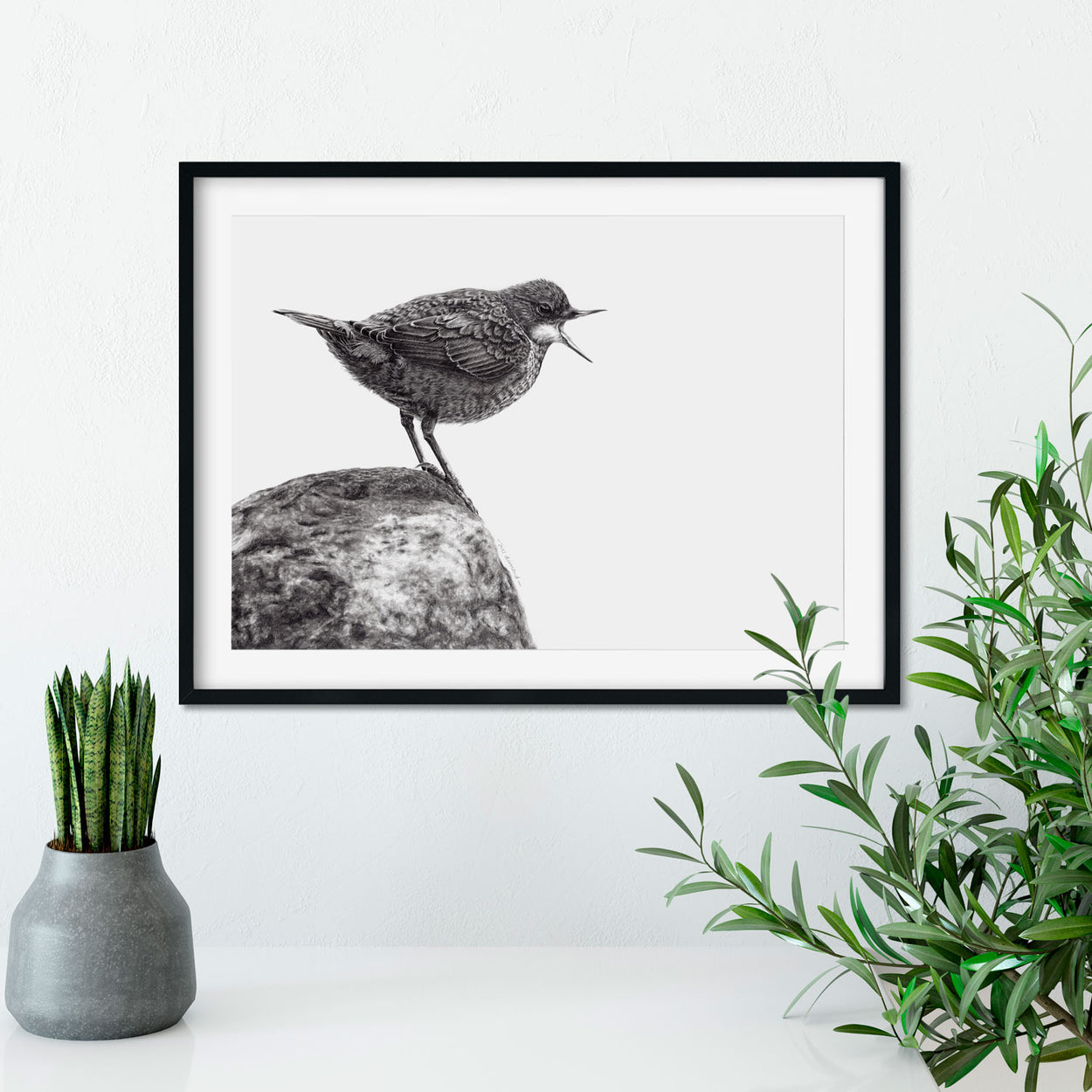 Dipper Drawing in Frame - The Thriving Wild