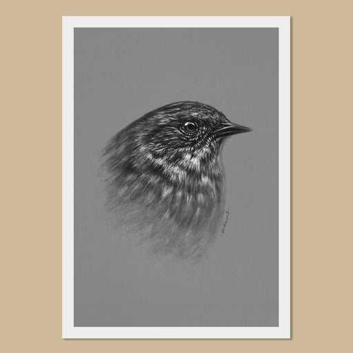 Dunnock Art Prints - The Thriving Wild - Jill Dimond