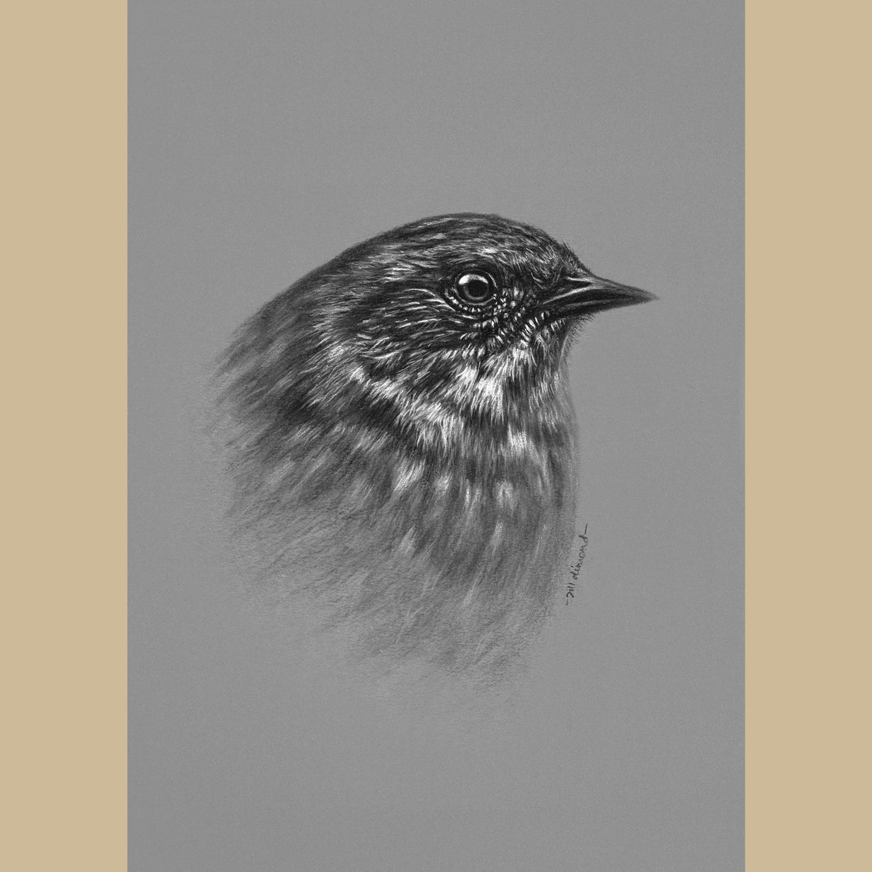 Dunnock Bird Charcoal Drawing - The Thriving Wild - Jill Dimond
