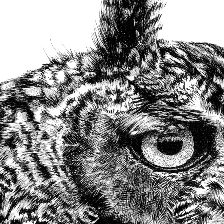 Eagle Owl Pen Drawing Close-up - The Thriving Wild