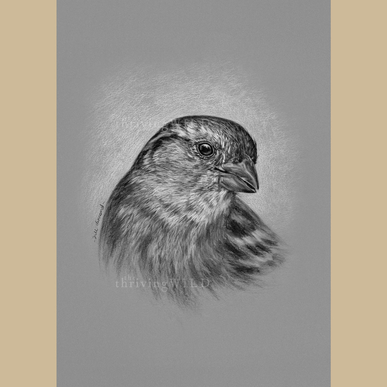 Female House Sparrow Charcoal Drawing - The Thriving Wild - Jill Dimond