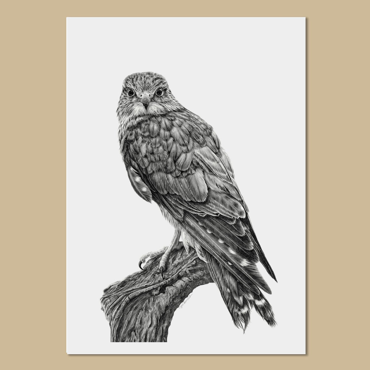 Female Merlin Art Prints - The Thriving Wild