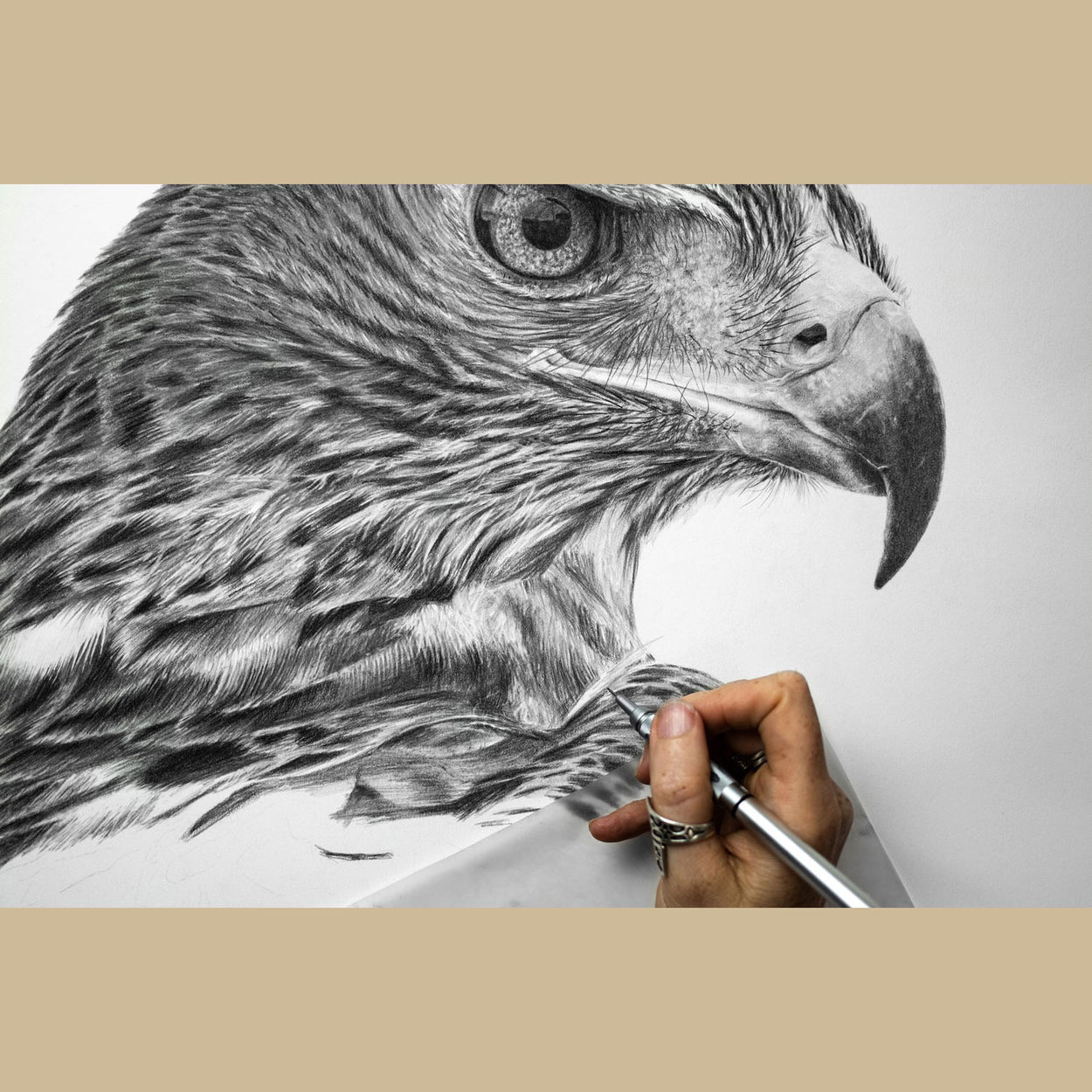 Golden Eagle Drawing in Progress - The Thriving Wild