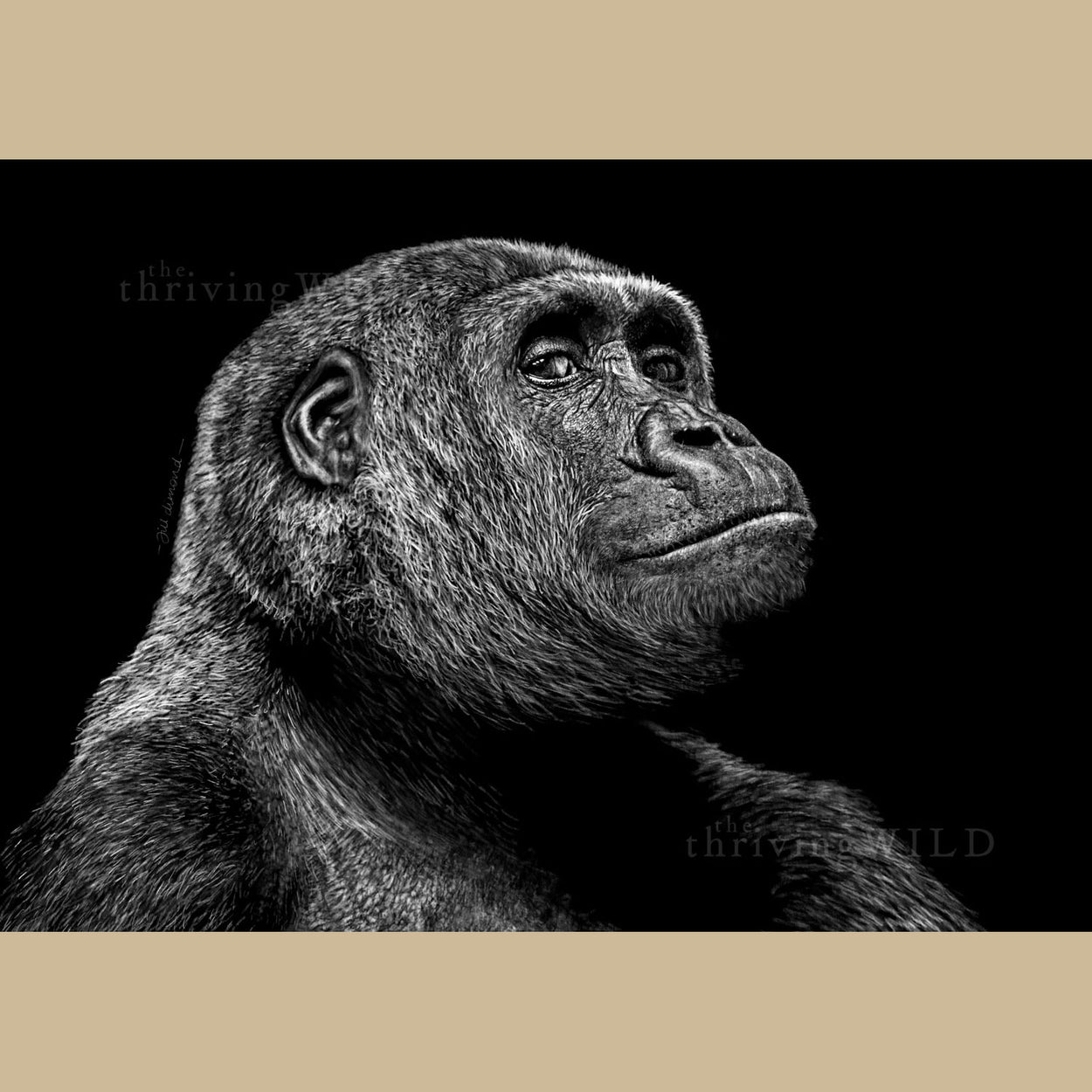Gahiji the Gorilla Art Prints